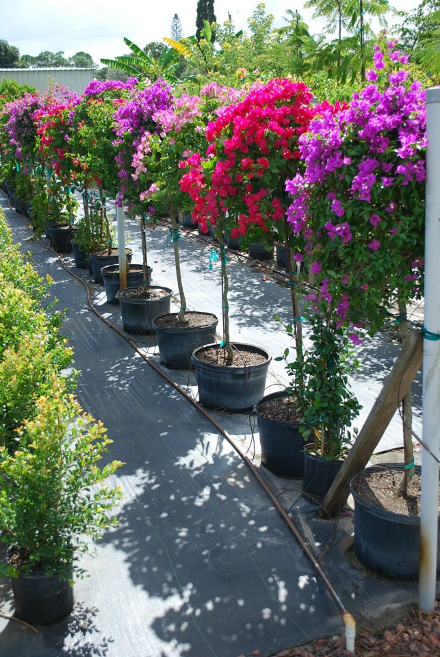 Stop By And Our Retail Nursery