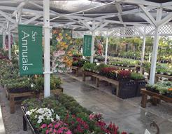 Stop by and shop our retail nursery